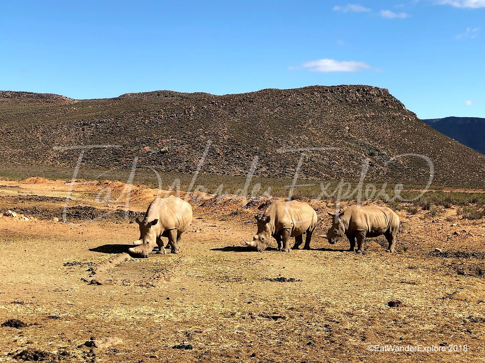 southafrica19.jpg