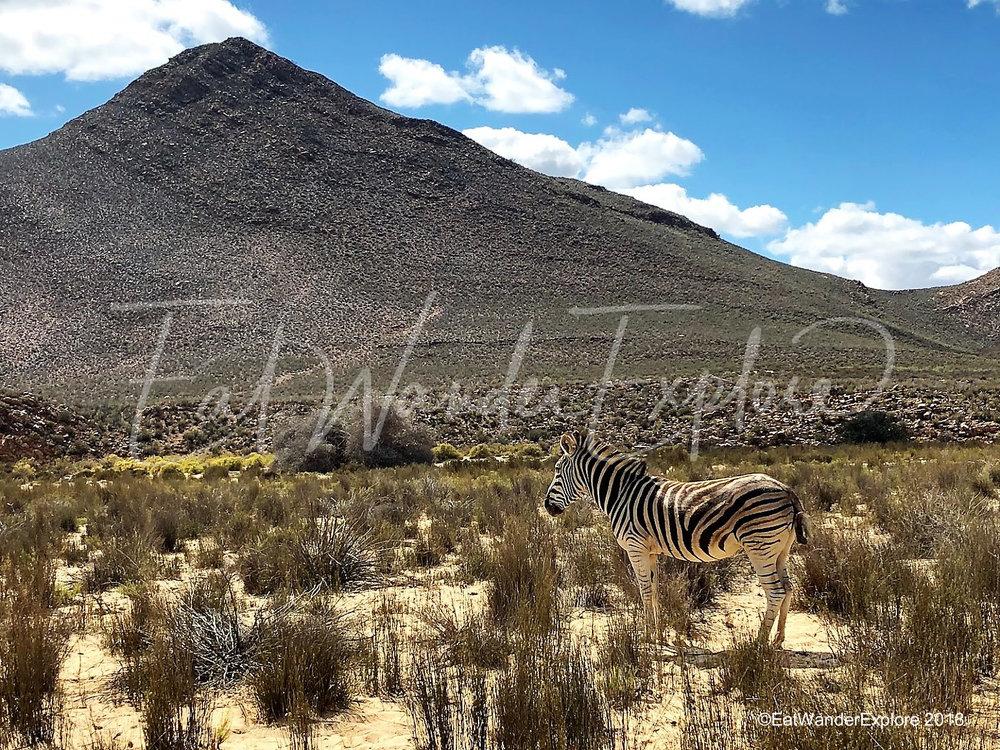 southafrica25.jpg