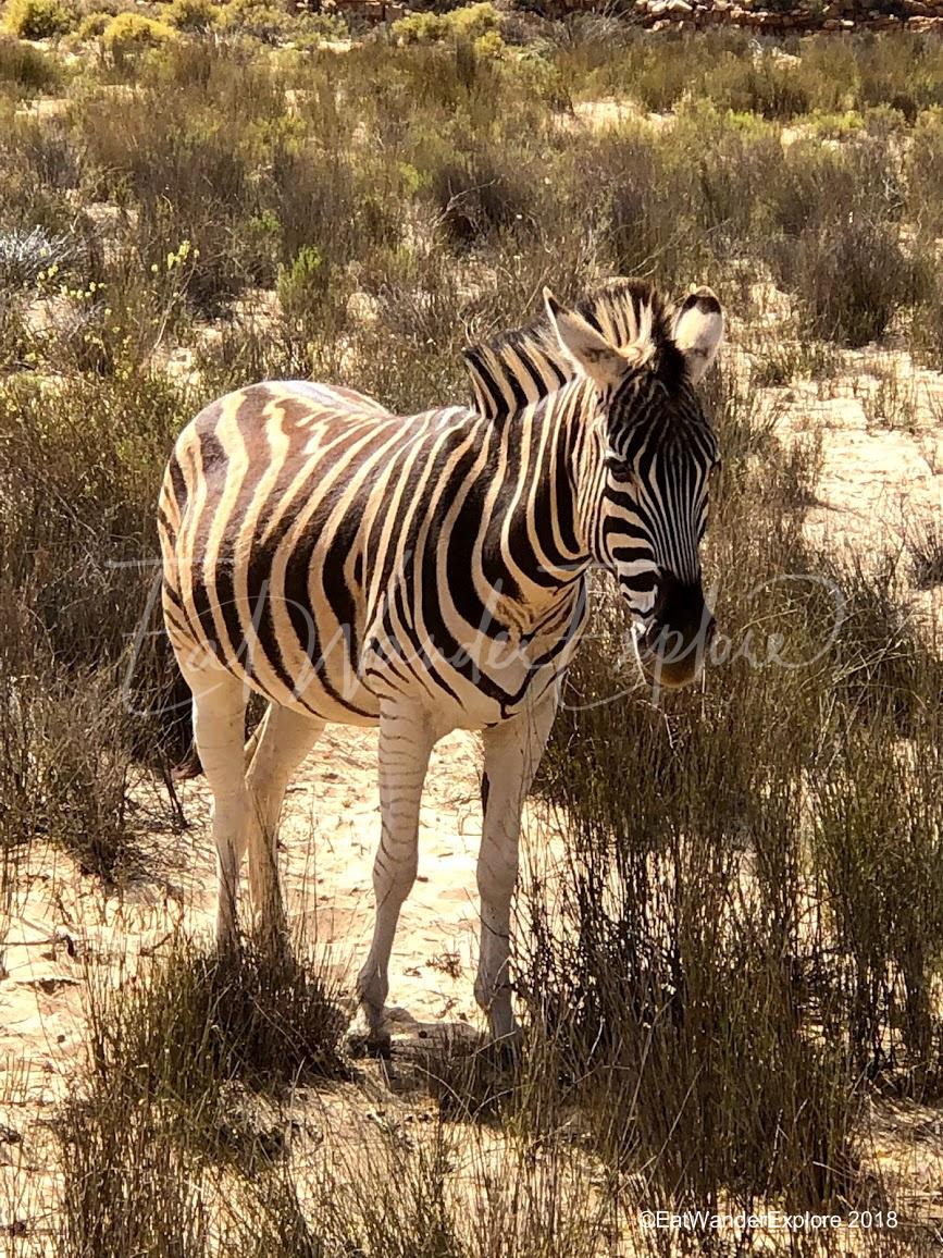 southafrica29.jpg