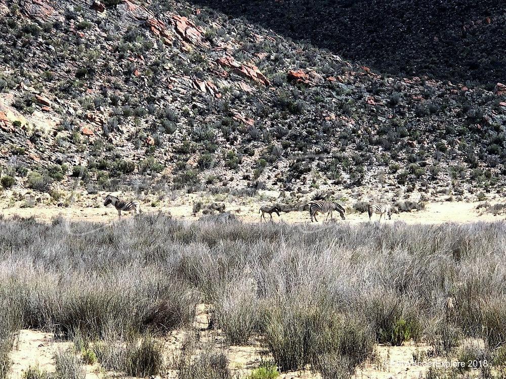 southafrica28.jpg