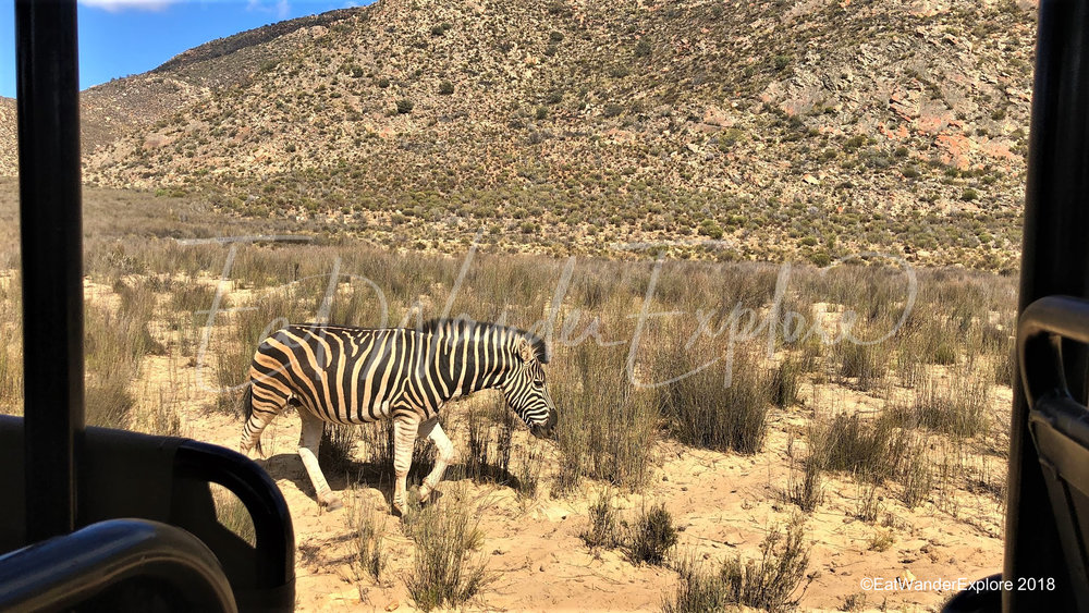 southafrica31.jpg