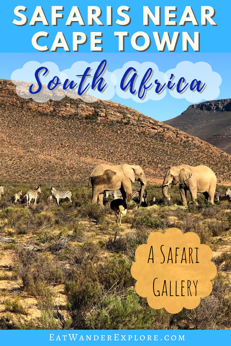 Safaris near Cape Town - A gallery - EatWanderExplore