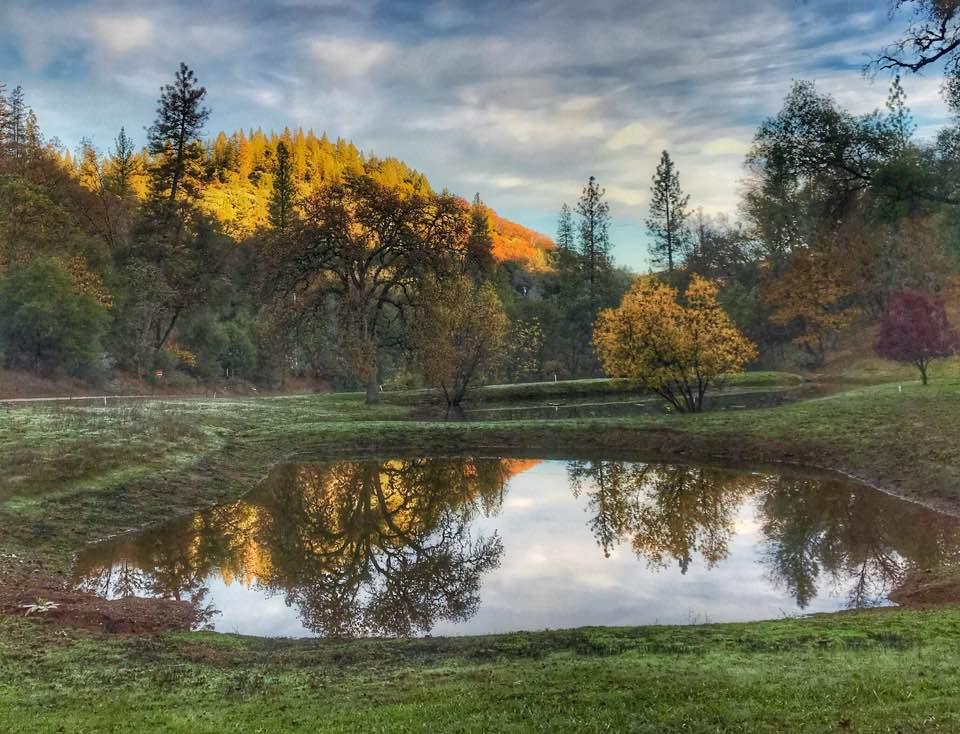 pond reflections.jpg