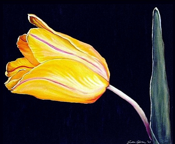 """Yellow Tulip"""