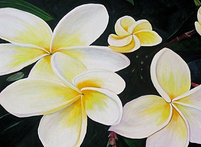 "Close up of ""Frangipani"""