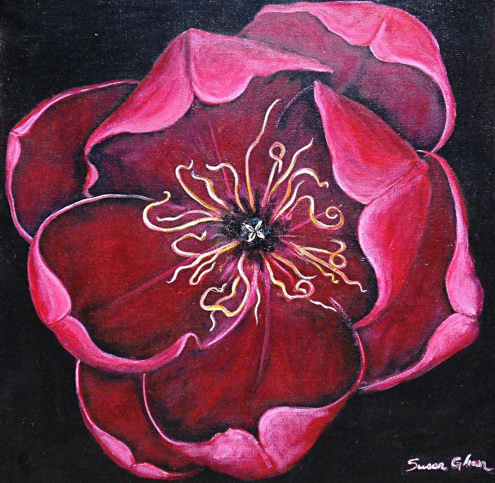 """""""Pink Tulip"""""""