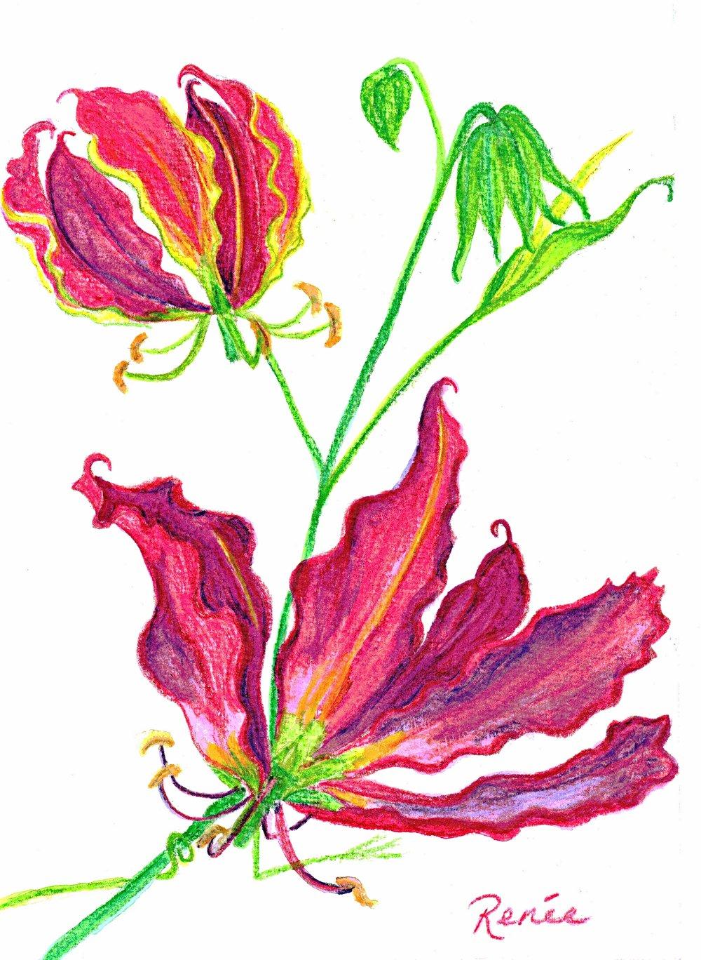 """Gloriosa Lilies"""