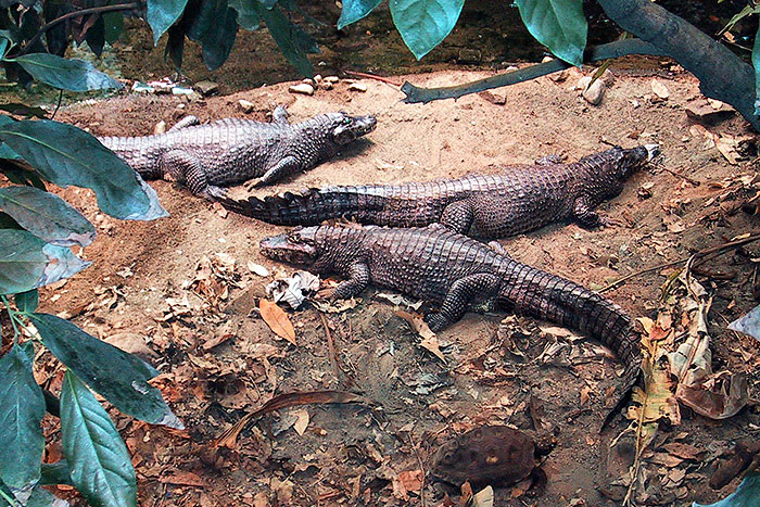 2008_100s_Animals_05_700px.jpg