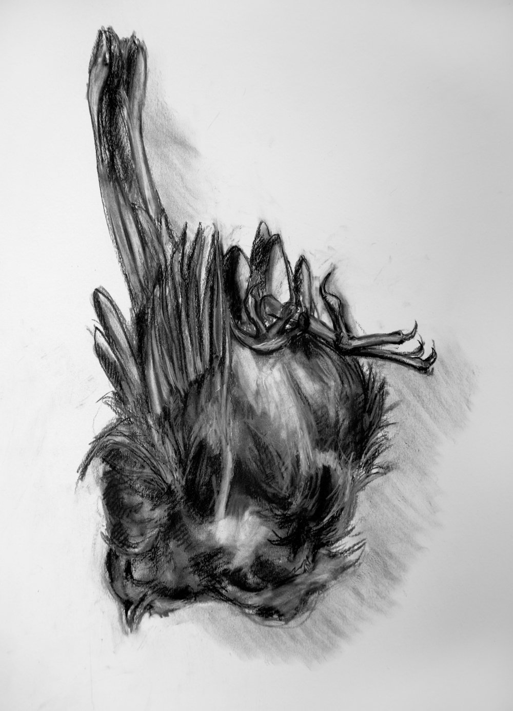 "Little Death #7. Charcoal. 19"" x 24"""