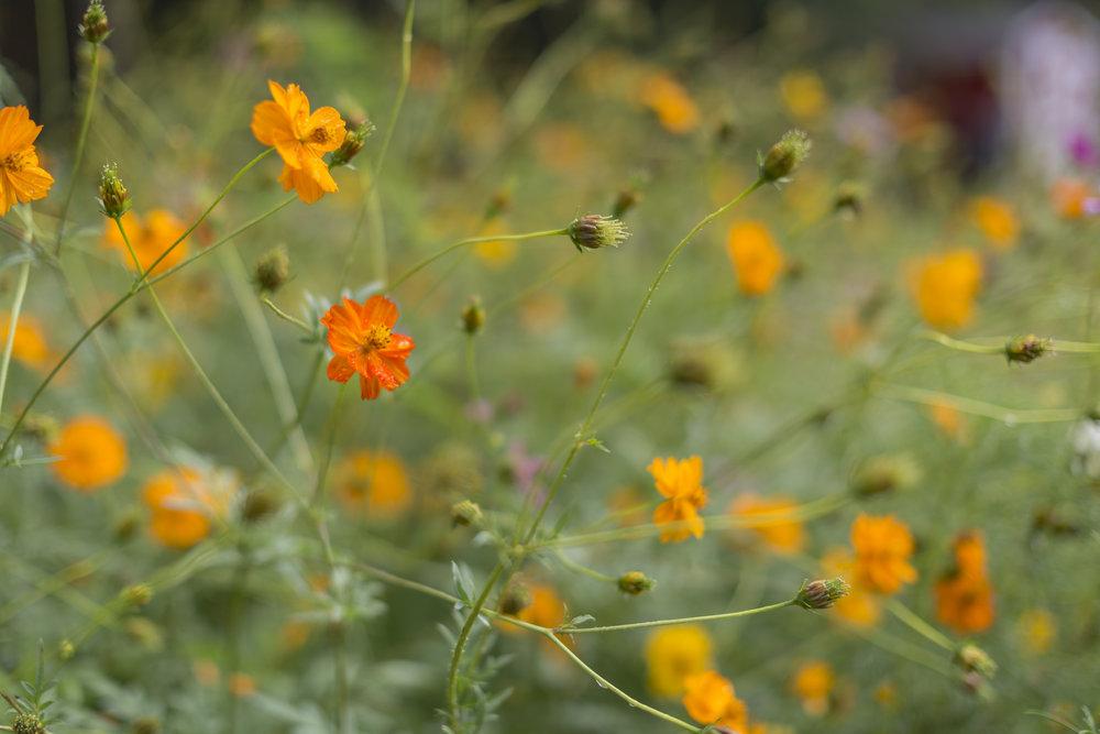 beautiful flowers on the grounds of camp kumbayah