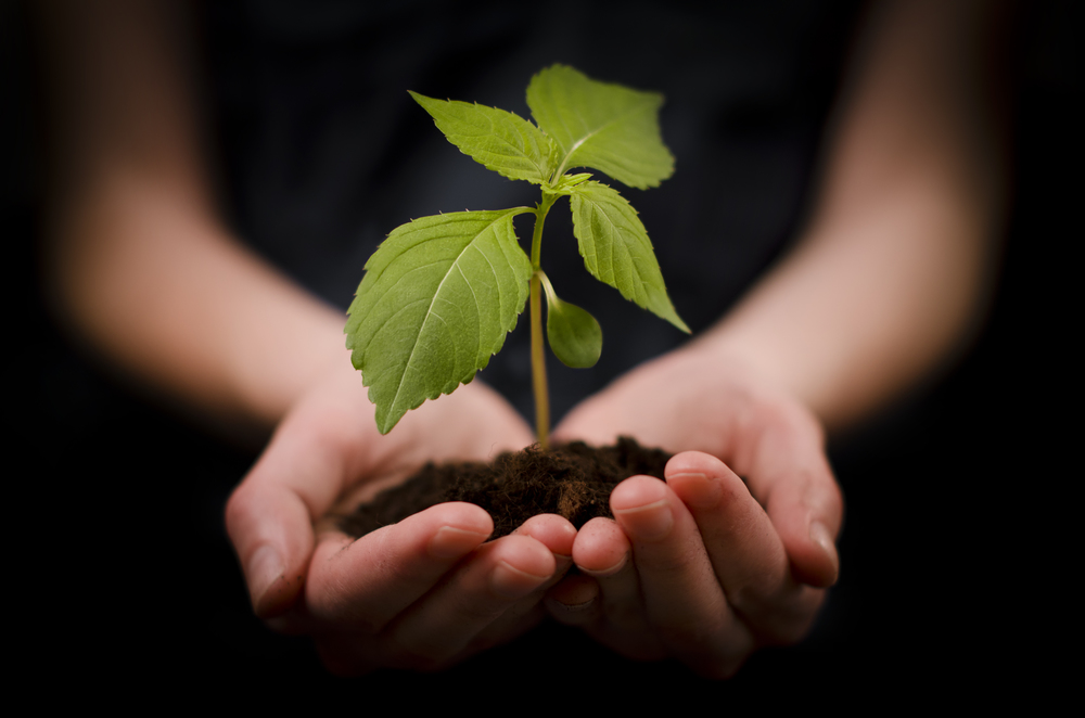 plant+growing+in+hands.jpg
