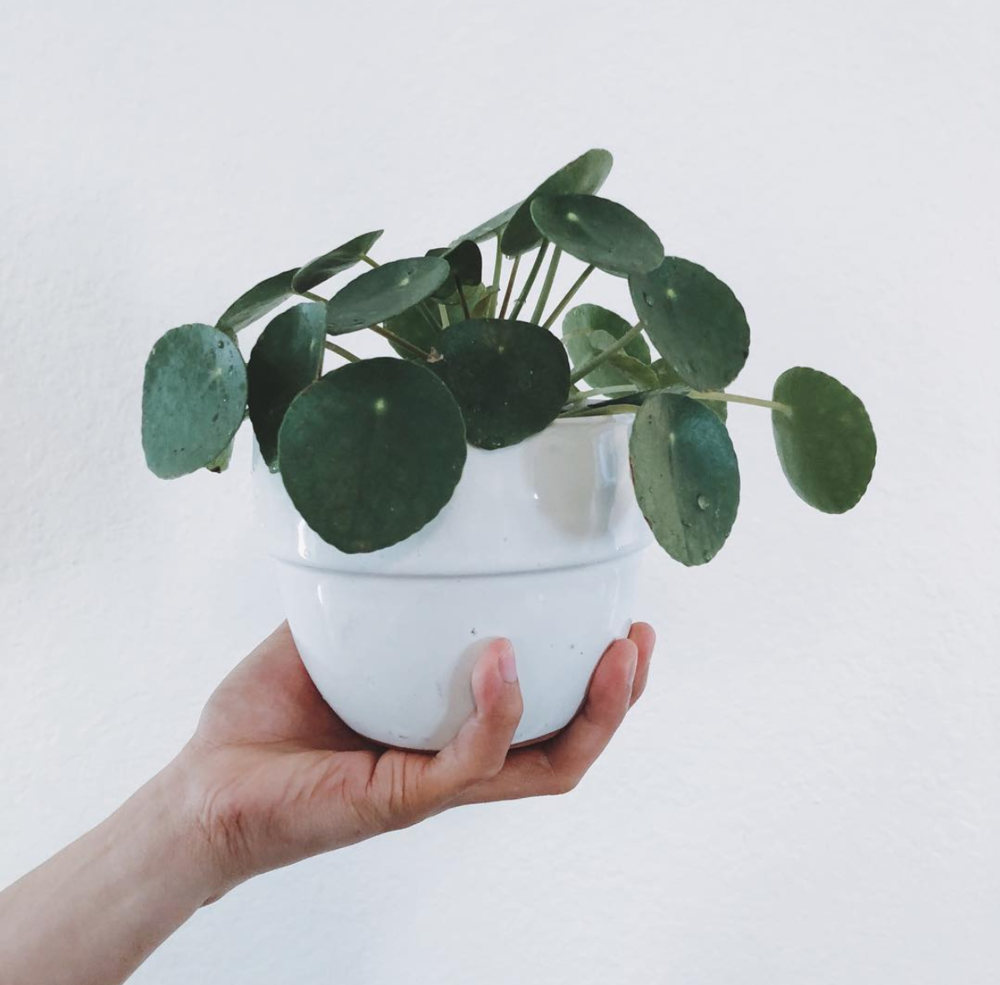 It's such a cute plant, you can't deny that.
