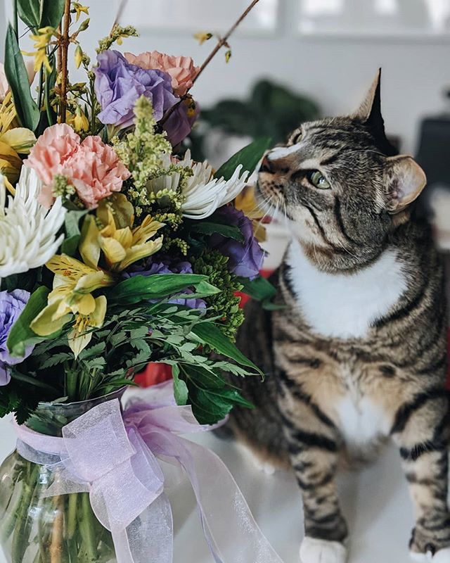 Thanks @nealhowland for the wonderful birthday flowers! Soba loves them too! Getting old doesn't feel so bad by your side 😚♥️😚♥️