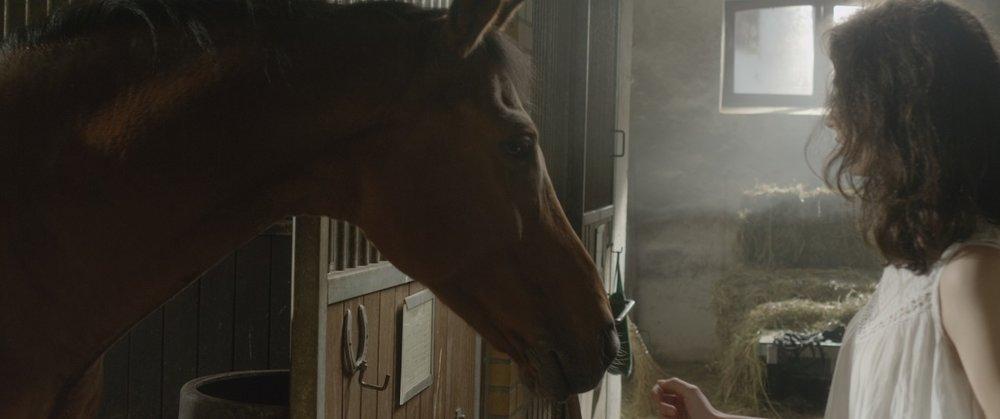 """Nicht immer macht das Pferd das, was man in dem Take von ihm möchte. Platz für Improvisation ist gefragt.  Screenshot aus """"Crooked Iron"""", Kurzfilm 2018"""