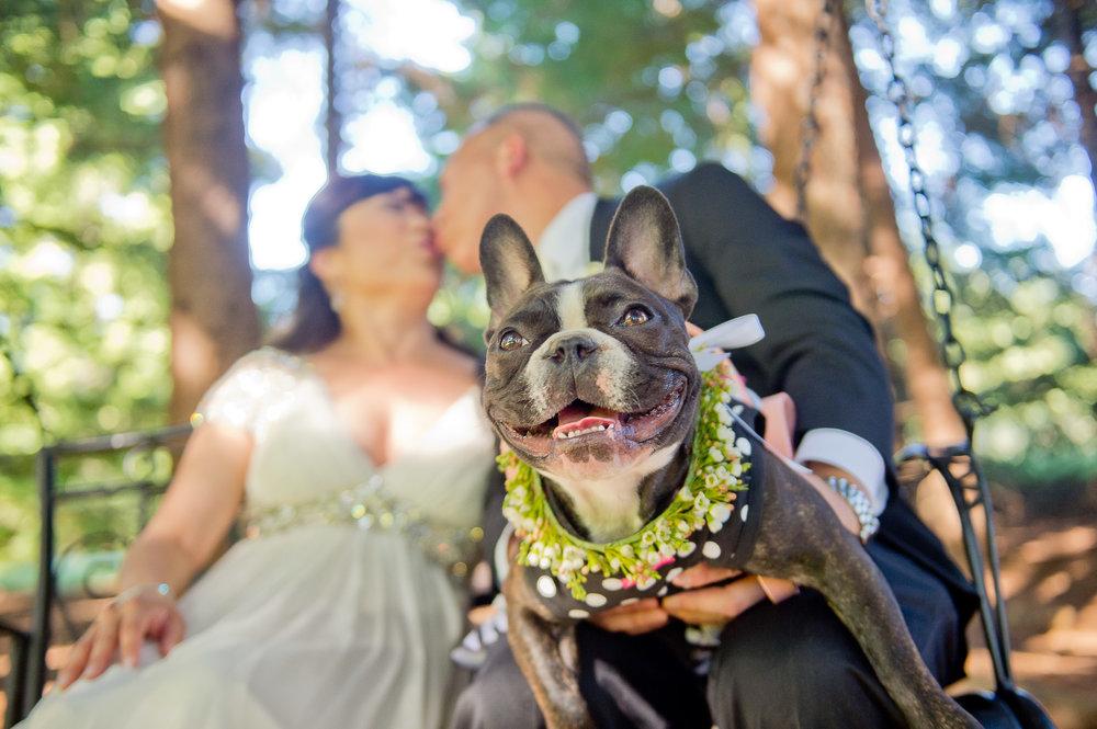 00046-moscastudio-gorge-crest-vineyard-weddings-ONLINE.jpg