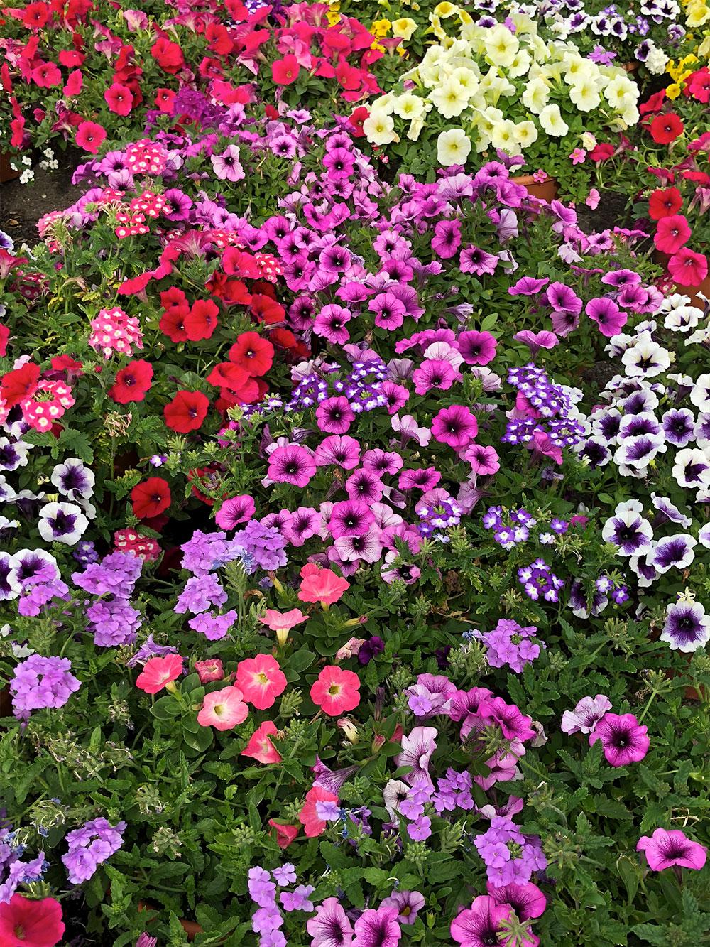 specials-flowers.jpg