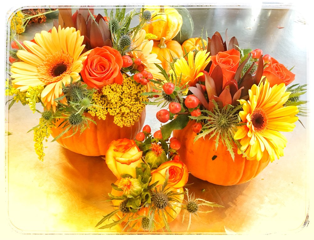 Pumpkin arrangements with roses and blue thistle available now for the holidays!