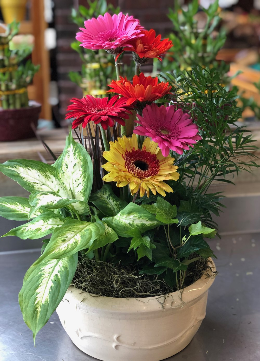 Gerbera and plants in clay pot available in our floral department. We create custom planters, too!