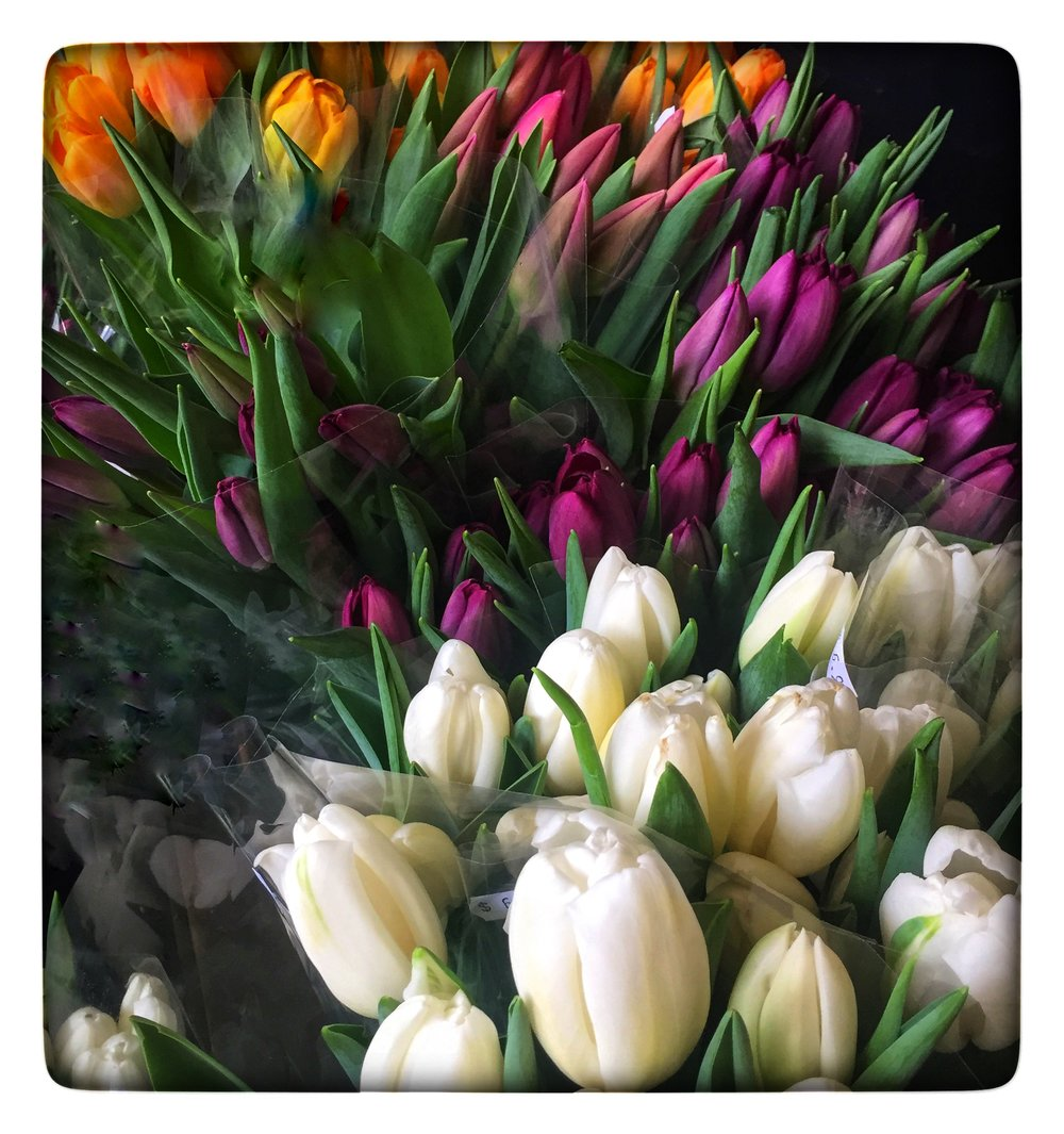 Fresh-cut Tulips at Russo's