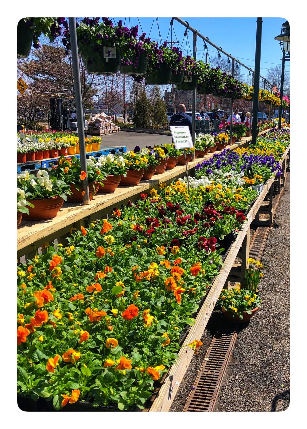 Flowers, plants, herbs and more arriving daily at Russo's!
