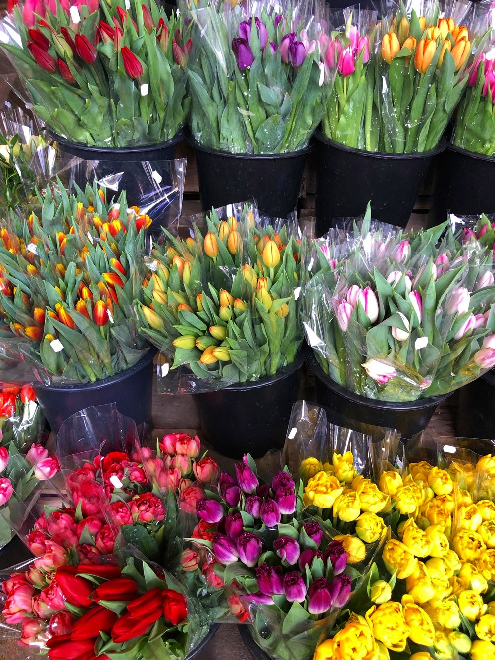 Tulips are on point this season and on sale this week!
