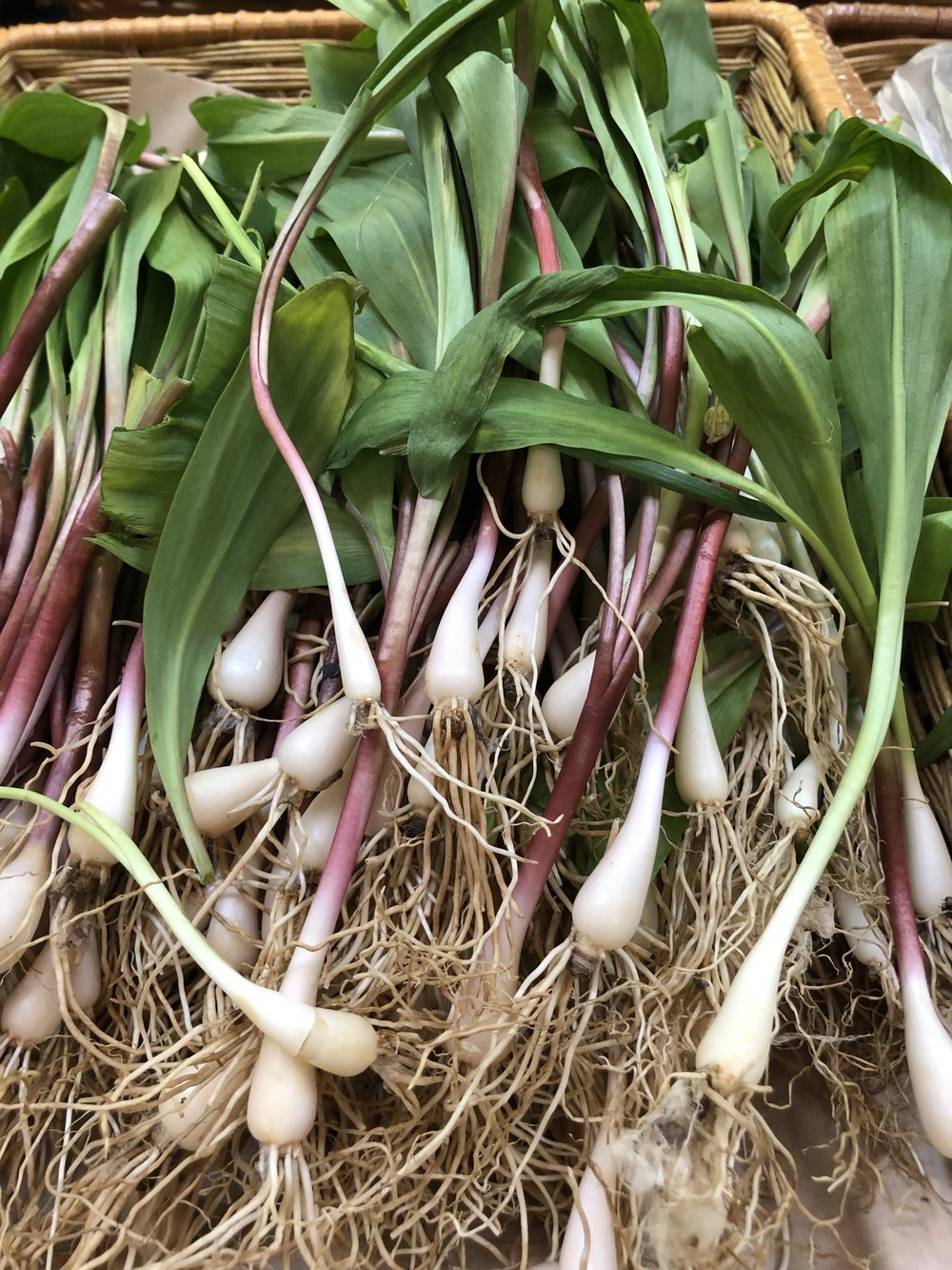 Ramps are wild leeks foraged in shady wooded areas. They are only available for a few more days this year. Enjoy them while you can!