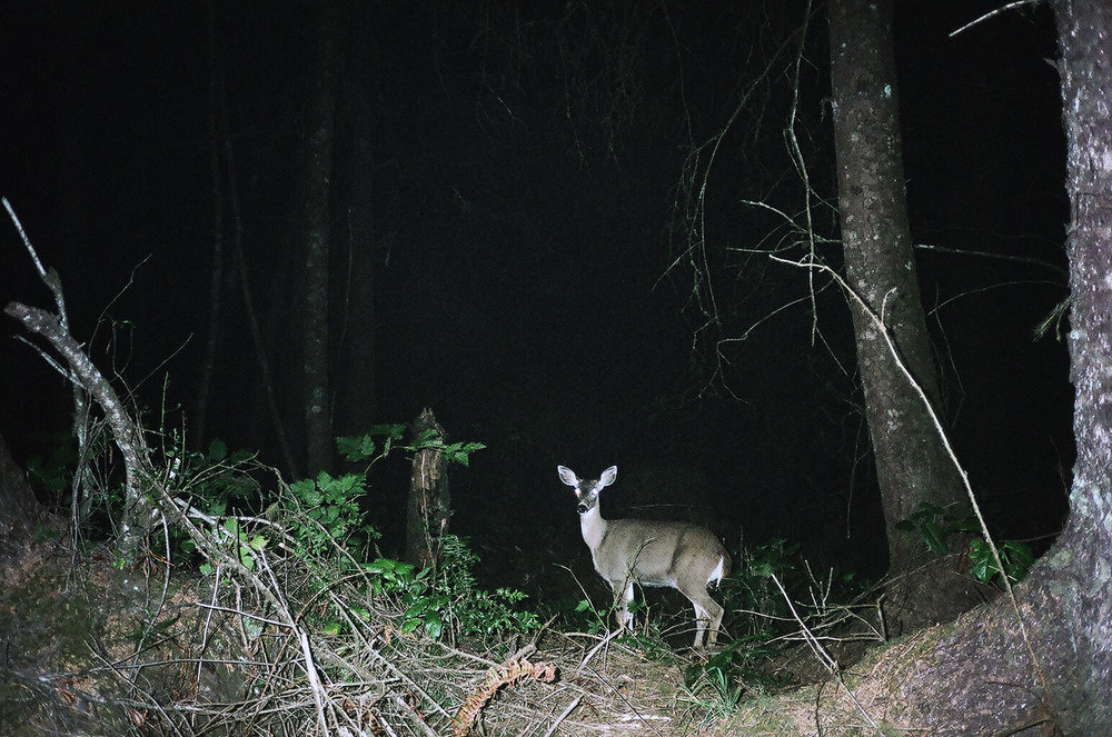 deeratnight1.jpg