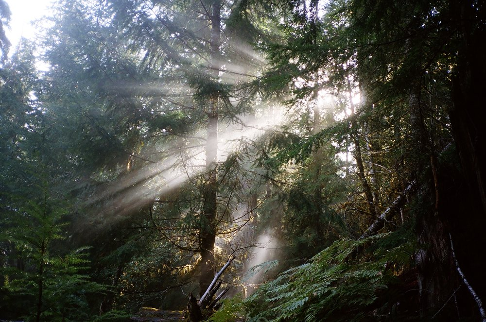 treeslight.JPG