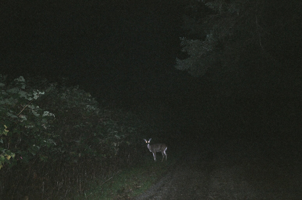 Jeff_Luker_night_deer.jpg