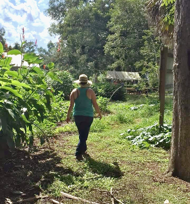 Permaculture Design Certificate Restoration Orchard