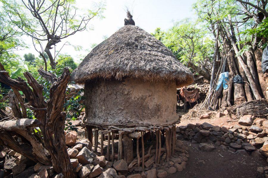 15A_3195-MattWicks-Africa2015-South-Omo-Ethiopia-Part-2-Bull-Jumping-GreatDistances-900x600.jpg