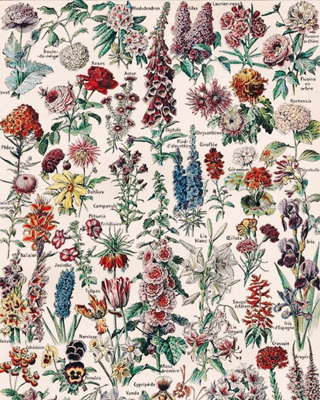 looking up posters of flowers has given me life this morning ...soon enough spring, soon enough 🌷🌹🌺🌸🌼 • • • • #mentalhealthawareness #mentalhealthmonday #flowerstagram #flowerwall #flowering #flowerinspiration #vintageaesthetic