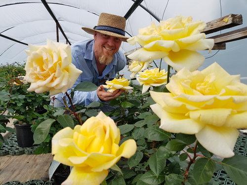 Westerose+Greenhouse+Roses