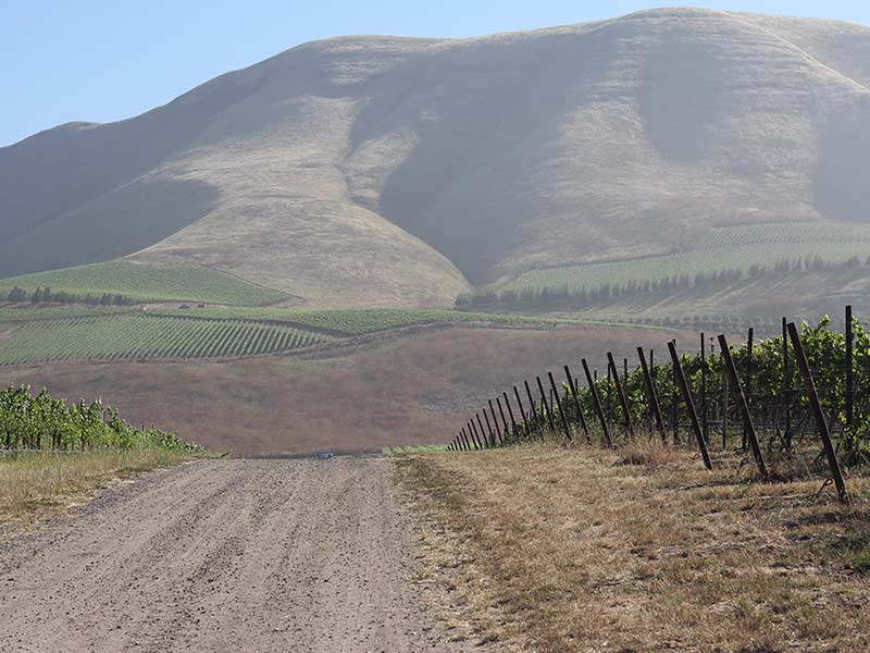 Bien Nacido - Santa Maria Valley - Chardonnay