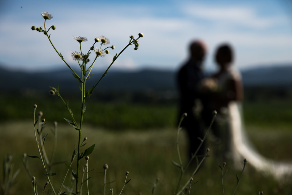 Wedding couple in front of wildflowers, Shenandoah Virginia