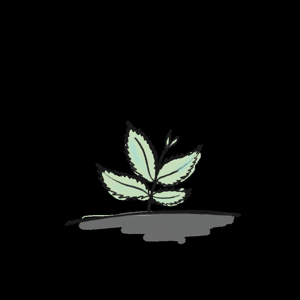 Mint-2.png