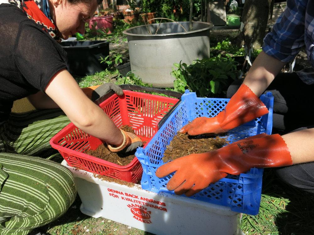 Soil Sifting.JPG