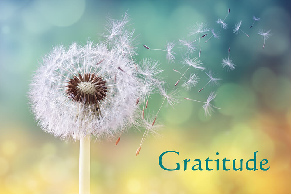 Gratitude Guided Hypnosis