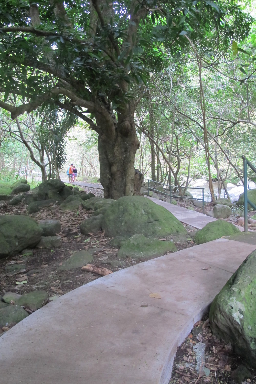 path down.JPG
