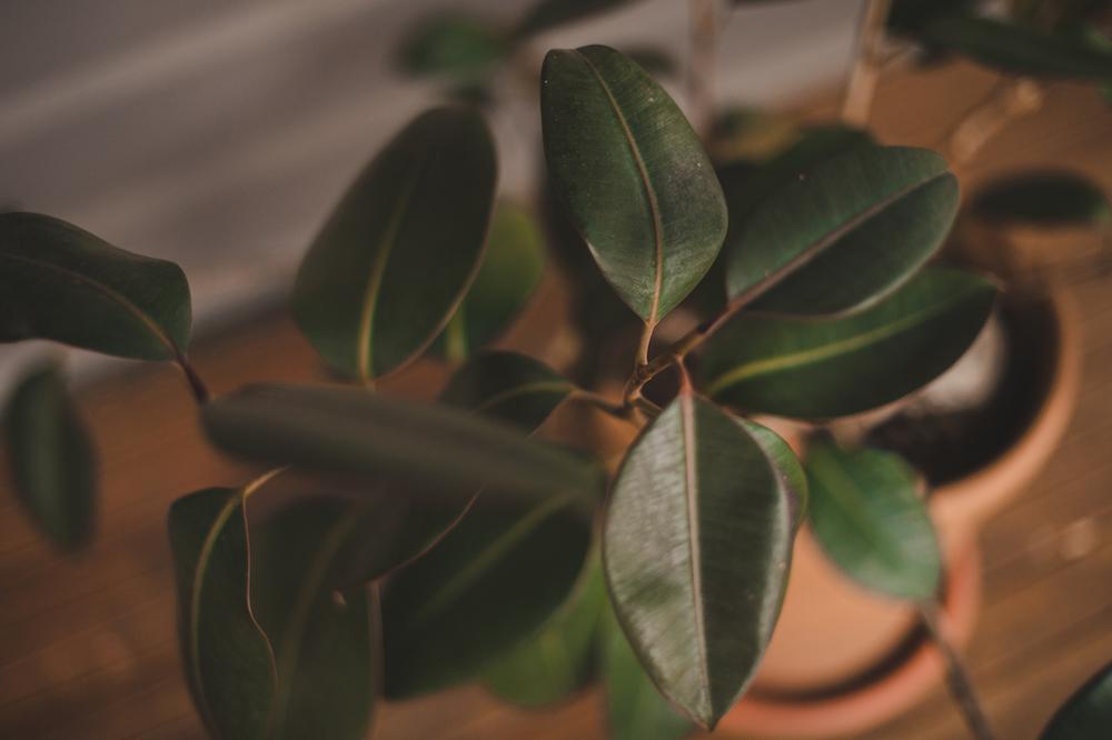EXTpot plant small.jpg