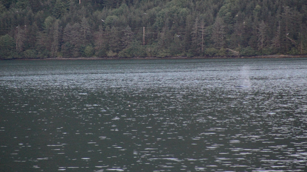 There were Orcas in this bay. A momma and her calf!