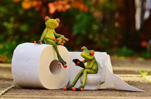 frog-1037261_1920.2.jpg