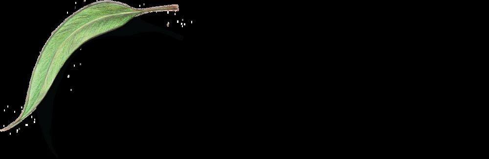 BBF_Logo_2017_Horizontal_Name&Leaf_CMYK_01.0.png