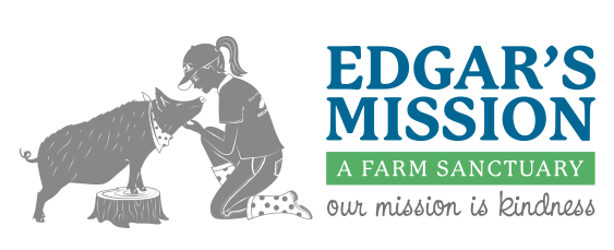 """Edgar's Mission   """"If we could live happy and healthy lives without harming others, why wouldn't we?""""  Edgar's Mission Farm Sanctuary is a not-for-profit farm sanctuary with a vision for a humane and just world for all.  Edgar's Mission is set on 153 peaceable acres near Lancefield, Victoria (Australia), about 60 km north of Melbourne.  We rescue and provide sanctuary to animals in need, currently providing lifelong love and care to over 450 rescued animals.  Through education, outreach, advocacy, community enrichment and farm tours, we encourage people to expand their circle of compassion to include all animals."""