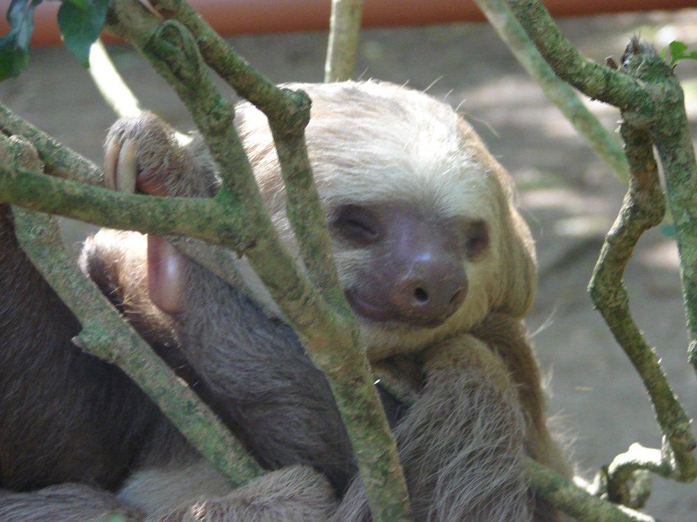 sloth-3.jpg