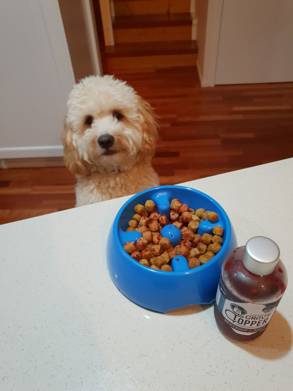 """- """"Our dog's a fussy eater, but one tablespoon of Dogeatz Toppers on her kibble and she laps it up. It's amazing to think that's it's good for her too!""""-Tim"""