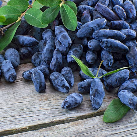 Honeyberry---Blue-Moon-2-450w.jpg