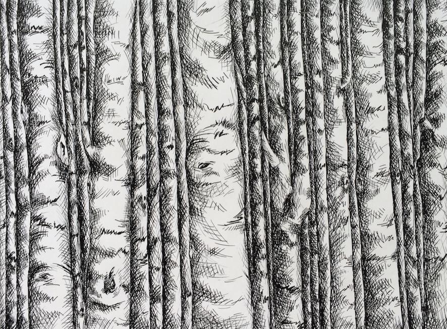 Plume sur papier, 24 cm X18 cm, 2016.JPG
