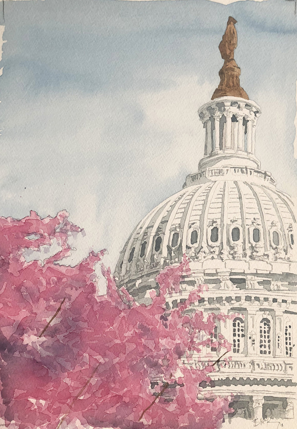 DC Dogwood, Watercolor on 300 lb, 11x17 inches, 2018