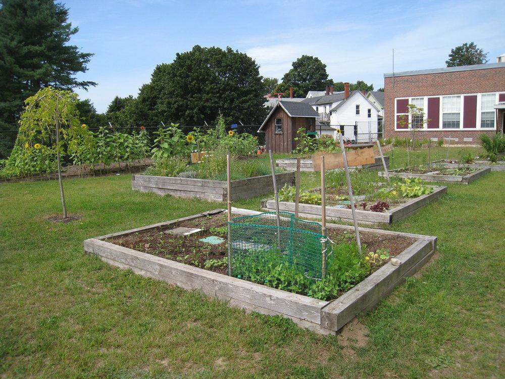 School Ground Greening Coalition